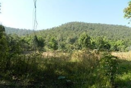 For Sale Land 3-2-– rai in Doi Saket, Chiang Mai, Thailand