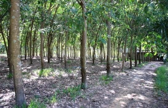 Property For Sale Bueng Kan Thailand