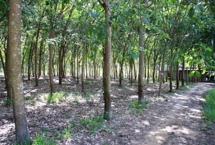 For Sale Land 35 rai in So Phisai, Bueng Kan, Thailand