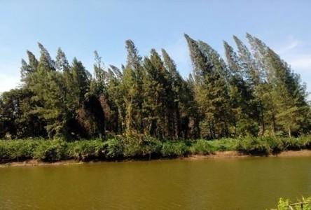 ขาย ที่ดิน 3 ไร่ ท่ายาง เพชรบุรี