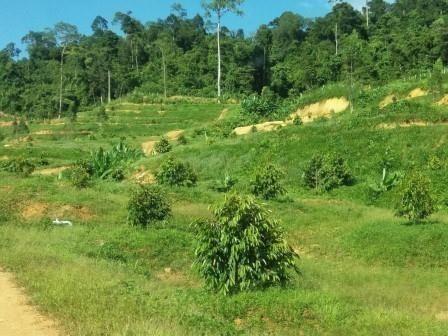 For Sale Land 250 rai in Khlung, Chanthaburi, Thailand | Ref. TH-PKCRFWFC