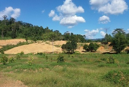 For Sale Land 250 rai in Khlung, Chanthaburi, Thailand