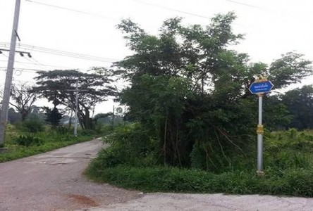 For Sale Land 169 sqwa in Phunphin, Surat Thani, Thailand