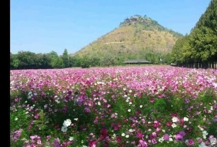 For Sale Land 13 rai in Pak Thong Chai, Nakhon Ratchasima, Thailand