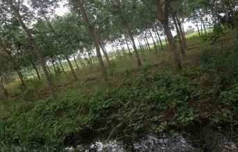 Located in the same area - Makham, Chanthaburi