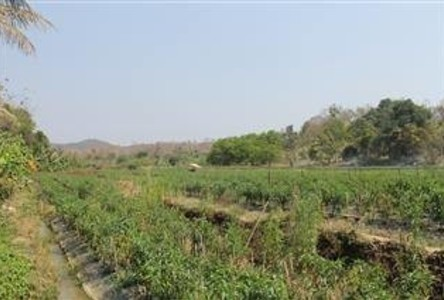 For Sale Land 16 rai in Doi Saket, Chiang Mai, Thailand
