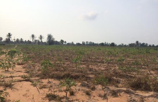 ขาย ที่ดิน 16.5 ไร่ บางละมุง ชลบุรี | Ref. TH-RAYHEXDW