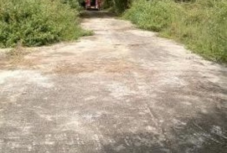 For Sale Land 100 sqwa in Doi Saket, Chiang Mai, Thailand