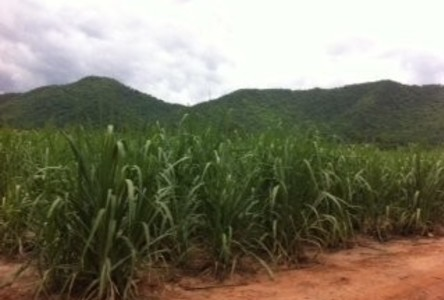 For Sale Land 13 rai in Ban Rai, Uthai Thani, Thailand