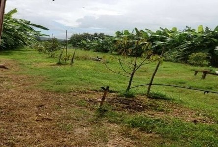 For Sale Land 22 rai in Kaeng Krachan, Phetchaburi, Thailand