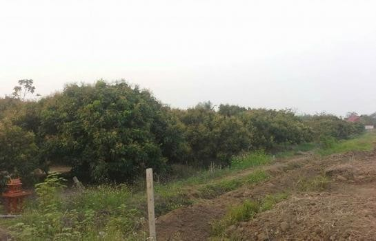 For Sale Land 3 rai in Hang Dong, Chiang Mai, Thailand | Ref. TH-FKQLNHEK