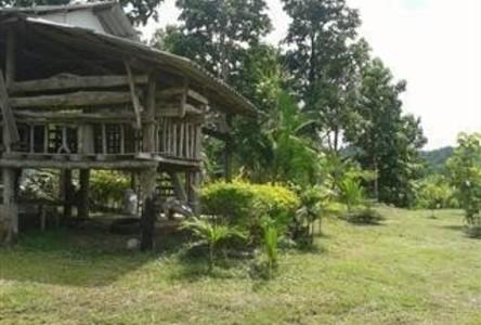 For Sale Land 6 rai in Doi Saket, Chiang Mai, Thailand
