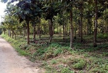 For Sale Land 5 rai in Wiang Pa Pao, Chiang Rai, Thailand
