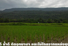 For Sale Land 13 rai in Phu Kradueng, Loei, Thailand