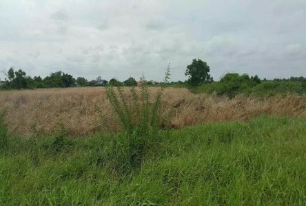 For Sale Land 10 rai in Bang Pakong, Chachoengsao, Thailand