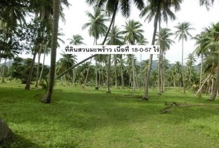 For Sale Land in Ko Pha-ngan, Surat Thani, Thailand