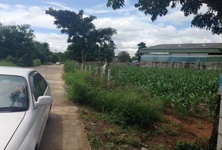 For Sale Land 18 rai in Chok Chai, Nakhon Ratchasima, Thailand