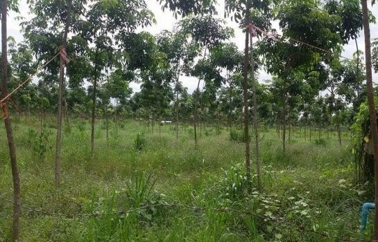 For Sale Land 58 rai in Mueang Udon Thani, Udon Thani, Thailand | Ref. TH-HGIHRUQR