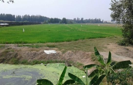 ขาย ที่ดิน 13 ไร่ สามโคก ปทุมธานี | Ref. TH-DPDYDXHB