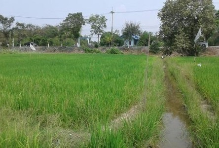 For Sale Land 13 rai in Sam Khok, Pathum Thani, Thailand