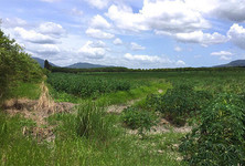For Sale Land 50 rai in Ban Bueng, Chonburi, Thailand