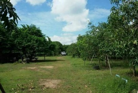 For Sale Land 30 rai in Wiang Nong Long, Lamphun, Thailand