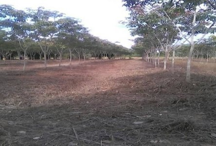 For Sale Land 25 rai in Pak Khat, Bueng Kan, Thailand