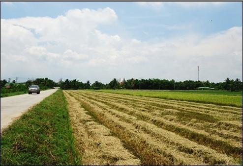 Продажа: Земельный участок 5 рай в районе Lat Bua Luang, Phra Nakhon Si Ayutthaya, Таиланд | Ref. TH-QEUYDFIR