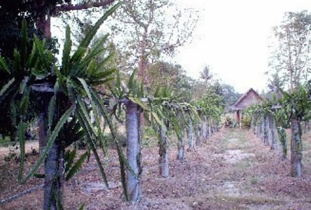 For Sale Land 61 rai in Suan Phueng, Ratchaburi, Thailand