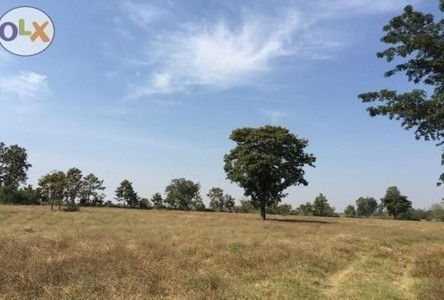 For Sale Land 19 rai in Bua Yai, Nakhon Ratchasima, Thailand