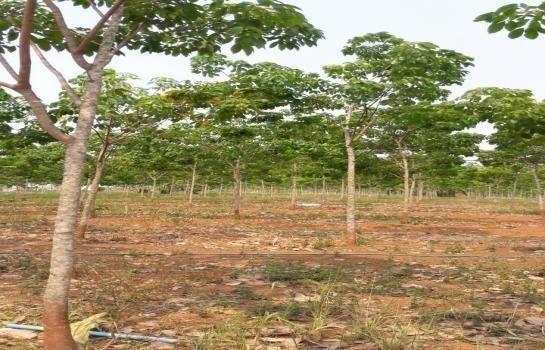 For Sale Land 40 rai in Si Songkhram, Nakhon Phanom, Thailand | Ref. TH-PVWGCMZQ