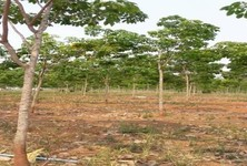 For Sale Land 40 rai in Si Songkhram, Nakhon Phanom, Thailand