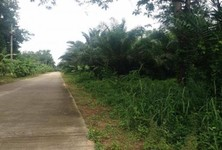 For Sale Land 49 rai in Phanom, Surat Thani, Thailand