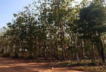 For Sale Land 36 rai in Wat Bot, Phitsanulok, Thailand
