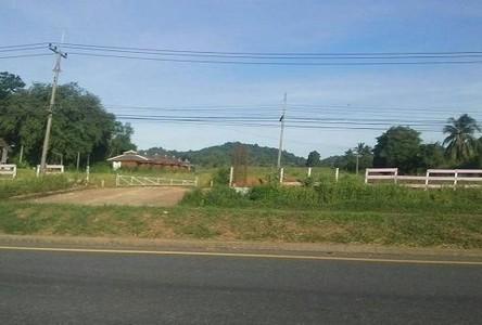 For Sale Land 60 rai in Nong Phai, Phetchabun, Thailand