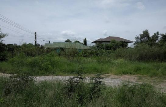For Rent Land 250 sqwa in Khlong Luang, Pathum Thani, Thailand | Ref. TH-ZBKMMHII