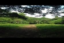 ขาย ที่ดิน 22-3-47 ไร่ เกาะสมุย สุราษฎร์ธานี