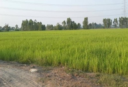 For Sale Land 14 rai in Bang Sai, Phra Nakhon Si Ayutthaya, Thailand