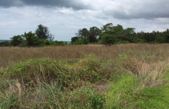 ขาย ที่ดิน 7 ไร่ หัวหิน ประจวบคีรีขันธ์ | Ref. TH-ACPPCPOZ