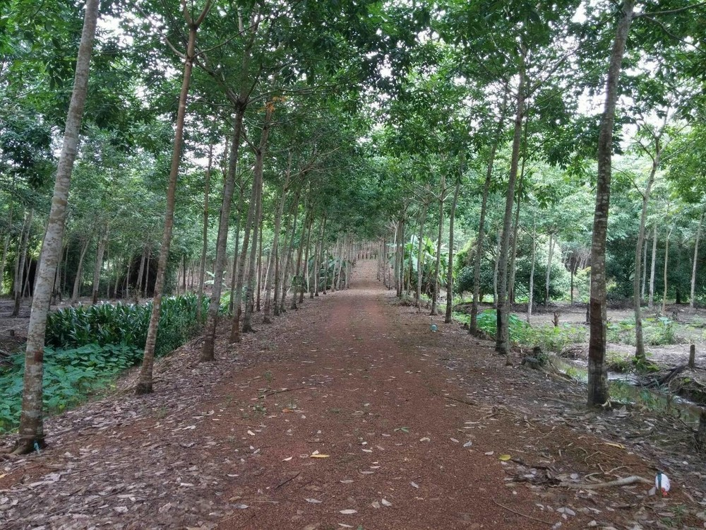 For Sale Land 29-0-83 rai in Khlung, Chanthaburi, Thailand | Ref. TH-XKRGUAXE