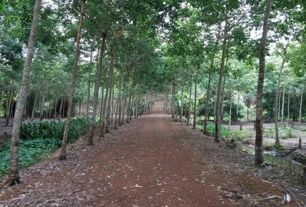 For Sale Land 29-0-83 rai in Khlung, Chanthaburi, Thailand