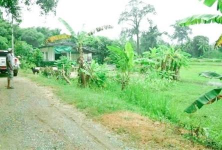 For Sale Land 4,000 sqm in Pak Chong, Nakhon Ratchasima, Thailand