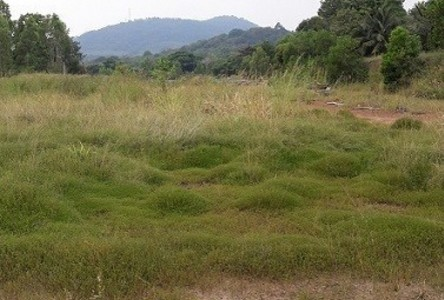 For Sale Land 29 rai in Mueang Rayong, Rayong, Thailand