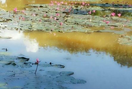 Продажа: Земельный участок 52 рай в районе Mueang Phayao, Phayao, Таиланд