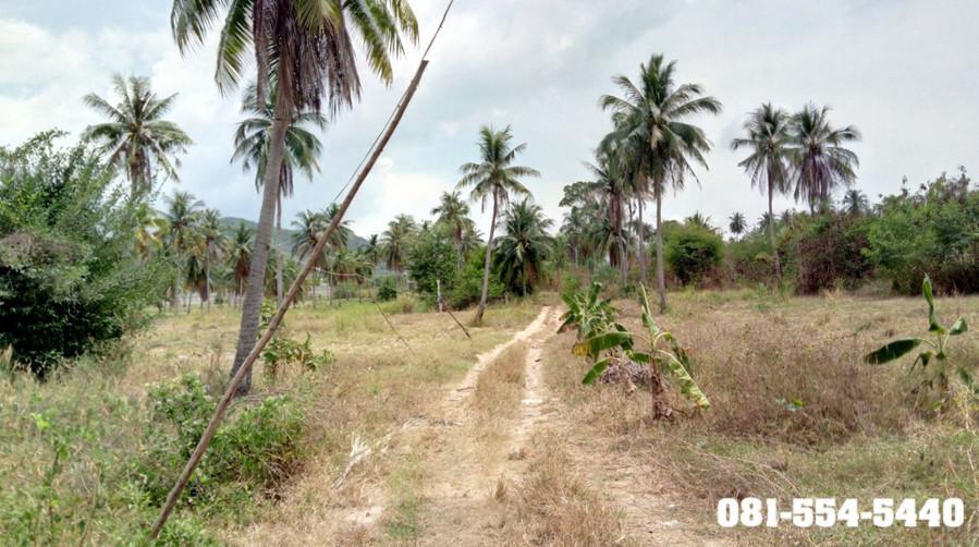 For Sale Land 18 rai in Sattahip, Chonburi, Thailand | Ref. TH-IYQRAKNO