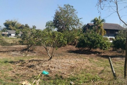 For Sale Land 100 sqwa in San Kamphaeng, Chiang Mai, Thailand