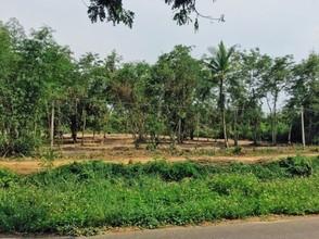 Located in the same area - Doi Lo, Chiang Mai