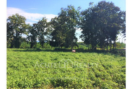 For Sale Land in Mae Rim, Chiang Mai, Thailand