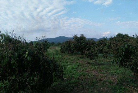 For Sale Land in Lamphun, North, Thailand