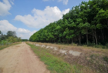 For Sale Land in Ban Khai, Rayong, Thailand